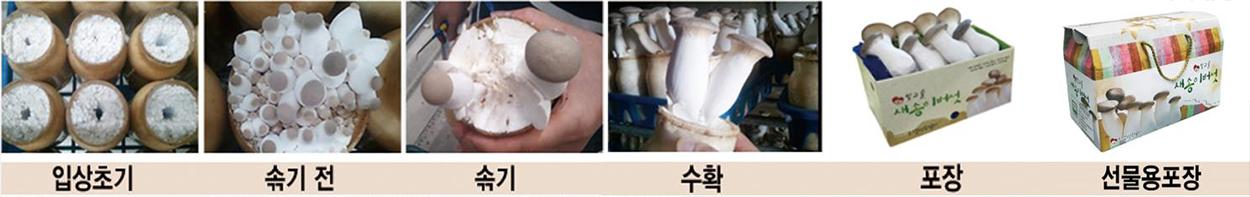 입상초기 > 솎기 전 > 솎기 > 수확 > 포장 > 선물용포장